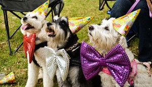 Celebrate your birthday with dogs.