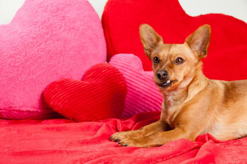Dogs deserves Valentine's treats, too.