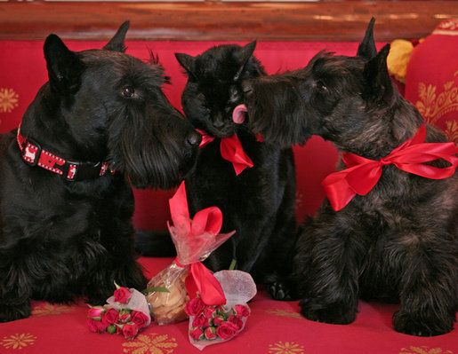 Show your dog you care by giving treats on Valentines Day.
